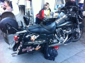 Harley Dogs